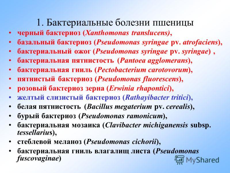 1. Бактериальные болезни пшеницы черный бактериоз (Xanthomonas translucens), базальный бактериоз (Pseudomonas syringae pv. atrofaciens), бактериальный ожог (Pseudomonas syringae pv. syringae), бактериальная пятнистость (Pantoea agglomerans), бактериа