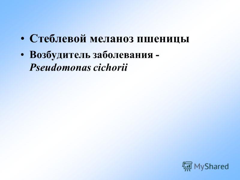 Стеблевой меланоз пшеницы Возбудитель заболевания - Pseudomonas cichorii