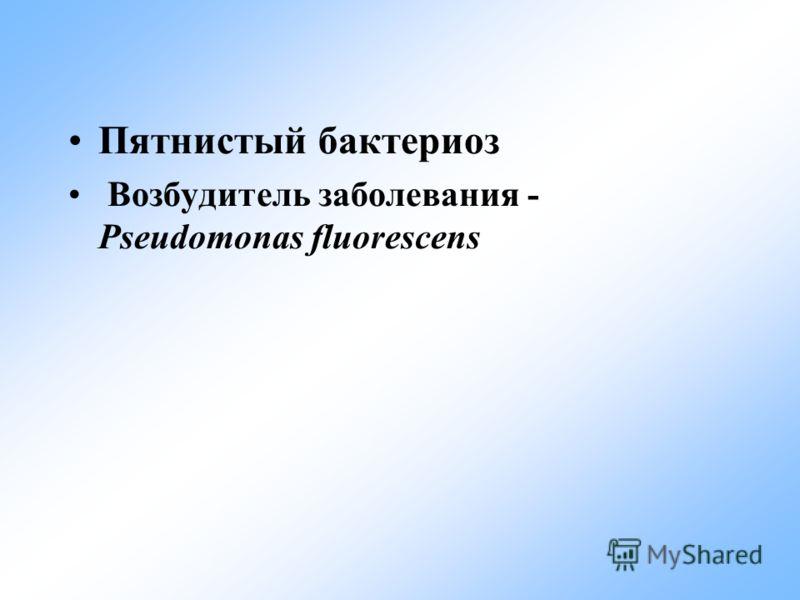 Пятнистый бактериоз Возбудитель заболевания - Pseudomonas fluorescens