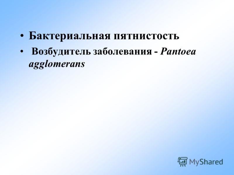Бактериальная пятнистость Возбудитель заболевания - Pantoea agglomerans