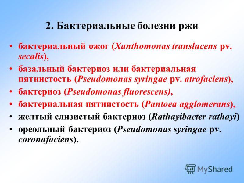 2. Бактериальные болезни ржи бактериальный ожог (Xanthomonas translucens pv. secalis), базальный бактериоз или бактериальная пятнистость (Pseudomonas syringae pv. atrofaciens), бактериоз (Pseudomonas fluorescens), бактериальная пятнистость (Pantoea a