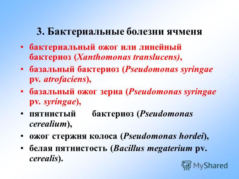 3. Бактериальные болезни ячменя бактериальный ожог или линейный бактериоз (Xanthomonas translucens), базальный бактериоз (Pseudomonas syringae pv. atrofaciens), базальный ожог зерна (Pseudomonas syringae pv. syringae), пятнистый бактериоз (Pseudomona