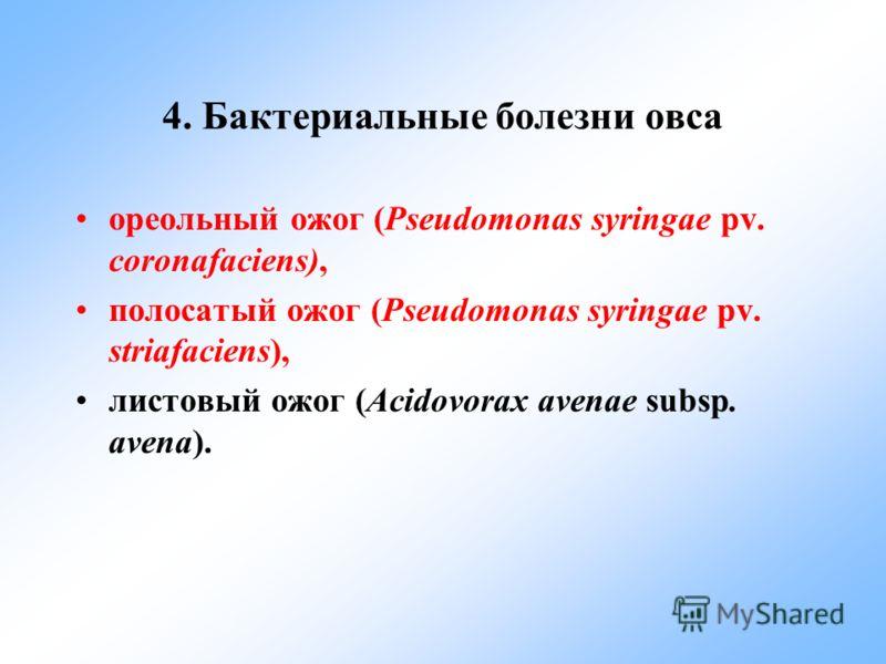 4. Бактериальные болезни овса ореольный ожог (Pseudomonas syringae pv. coronafaciens), полосатый ожог (Pseudomonas syringae pv. striafaciens), листовый ожог (Acidovorax avenae subsp. avena).