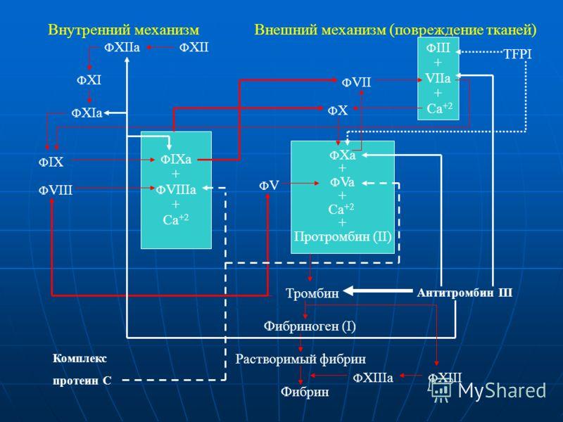 Внутренний механизмВнешний механизм (повреждение тканей) Ф III + VIIа + Са +2 ФXФX Ф Xa + Ф Va + Ca +2 + Протромбин (II) Тромбин Фибриноген (I) Растворимый фибрин Фибрин Ф IX Ф VIII Ф XI Ф XII Ф XIa Ф XIIa Ф VII Ф IXa + Ф VIIIa + Ca +2 ФVФV Антитромб
