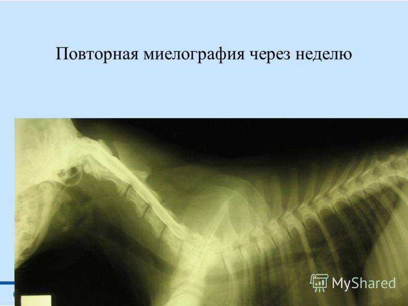 Миелография собаки после ДТП отек спинного мозга