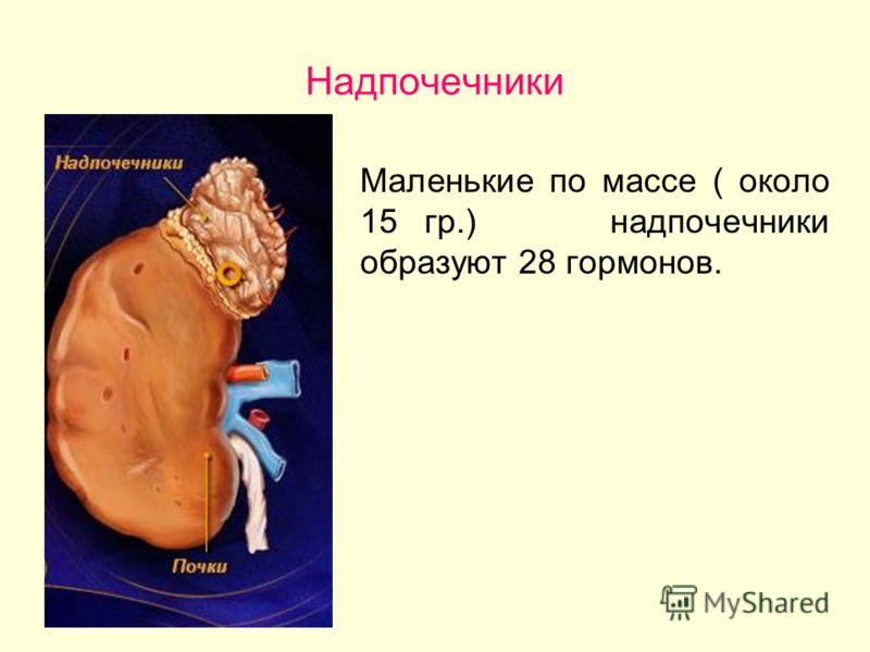 Надпочечники Маленькие по массе ( около 15 гр.) надпочечники образуют 28 гормонов.
