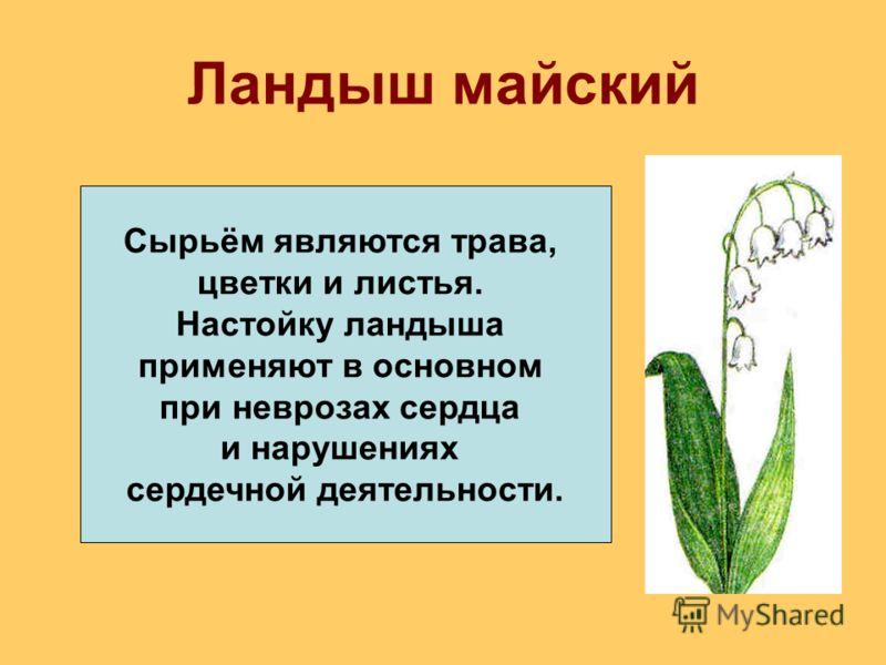 Ландыш майский Сырьём являются трава, цветки и листья. Настойку ландыша применяют в основном при неврозах сердца и нарушениях сердечной деятельности.