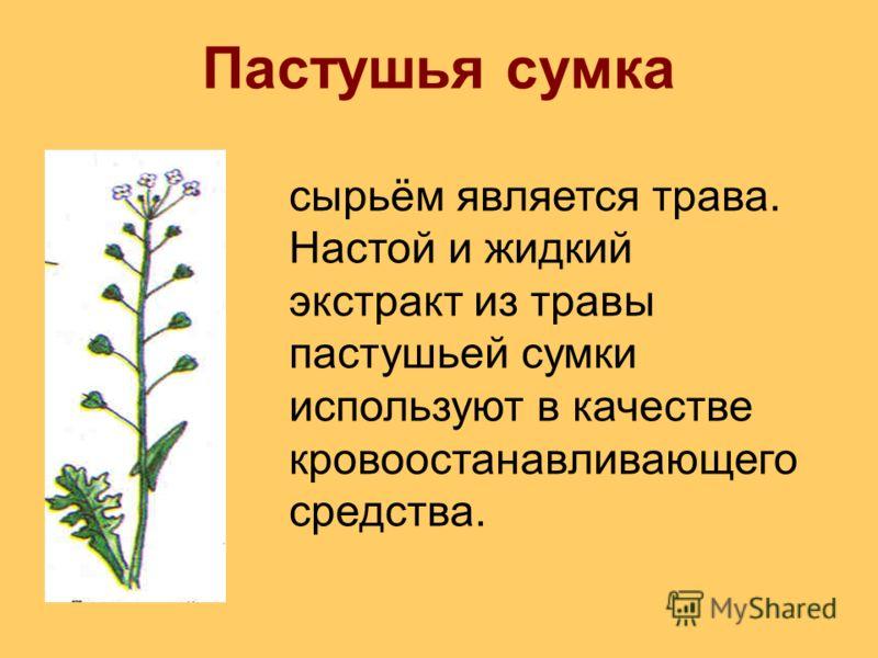 Пастушья сумка сырьём является трава. Настой и жидкий экстракт из травы пастушьей сумки используют в качестве кровоостанавливающего средства.