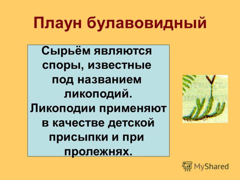 Плаун булавовидный Сырьём являются споры, известные под названием ликоподий. Ликоподии применяют в качестве детской присыпки и при пролежнях.