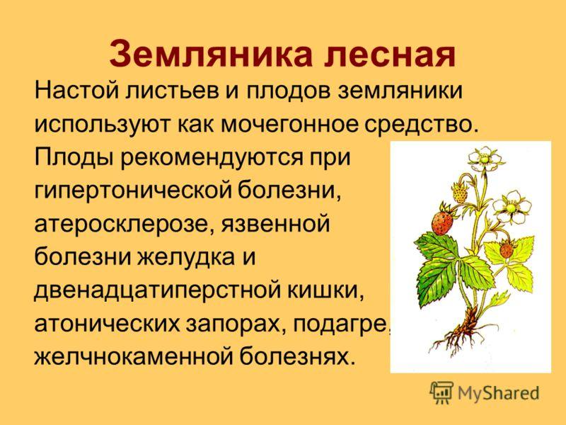 Земляника лесная Настой листьев и плодов земляники используют как мочегонное средство. Плоды рекомендуются при гипертонической болезни, атеросклерозе, язвенной болезни желудка и двенадцатиперстной кишки, атонических запорах, подагре, желчнокаменной б