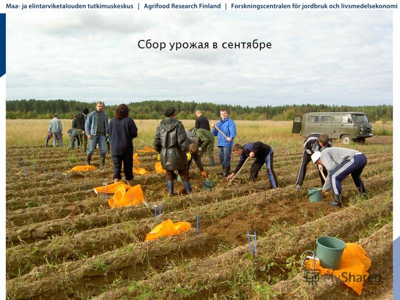 Сбор урожая в сентябре