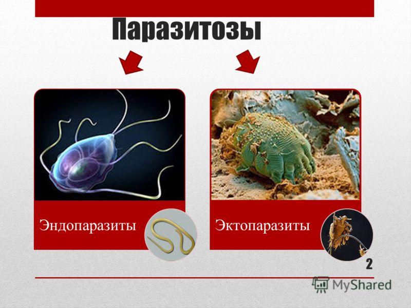 Паразитозы ЭндопаразитыЭктопаразиты 2