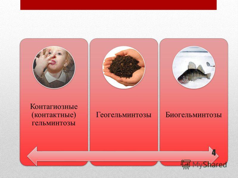Контагиозные (контактные) гельминтозы ГеогельминтозыБиогельминтозы 4