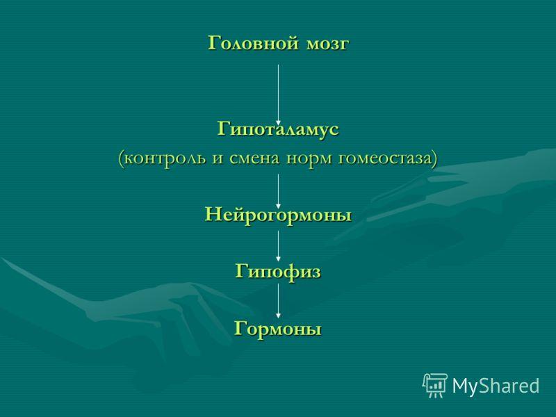 Головной мозг Гипоталамус (контроль и смена норм гомеостаза) НейрогормоныГипофизГормоны