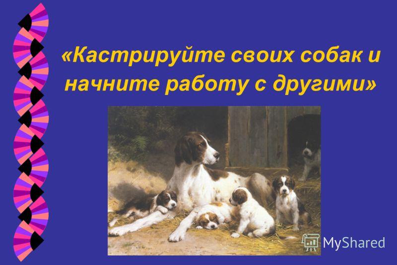 «Кастрируйте своих собак и начните работу с другими»