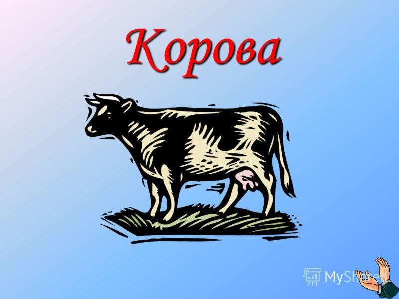 Рыжий молокозавод день жует и ночь жует: ведь траву не так легко переделать в молоко.