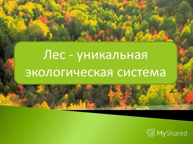 Лес - уникальная экологическая система