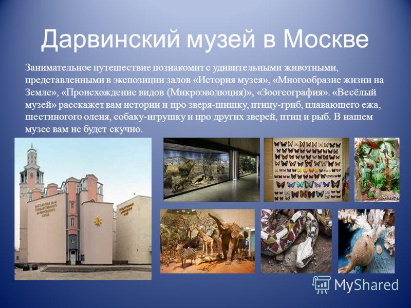 Дарвинский музей в Москве Занимательное путешествие познакомит с удивительными животными, представленными в экспозиции залов «История музея», «Многообразие жизни на Земле», «Происхождение видов (Микроэволюция)», «Зоогеография». «Весёлый музей» расска