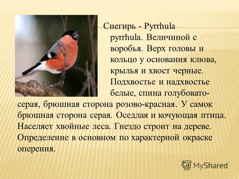 Снегирь - Pyrrhula pyrrhula. Величиной с воробья. Верх головы и кольцо у основания клюва, крылья и хвост черные. Подхвостье и надхвостье белые, спина голубовато- серая, брюшная сторона розово-красная. У самок брюшная сторона серая. Оседлая и кочующая