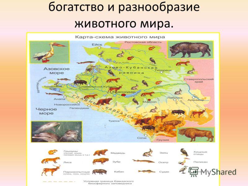 богатство и разнообразие животного мира.