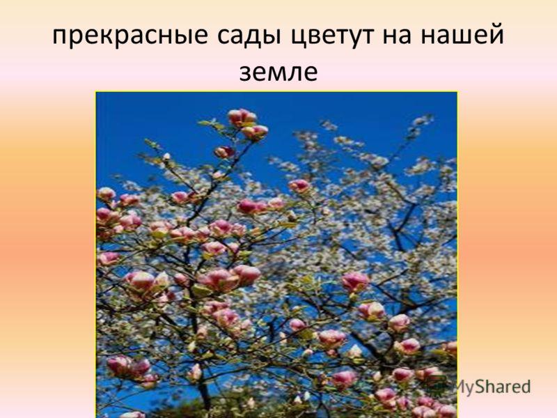 прекрасные сады цветут на нашей земле