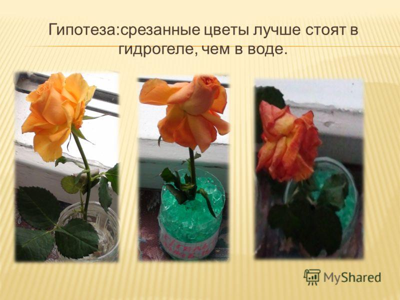 Гипотеза:срезанные цветы лучше стоят в гидрогеле, чем в воде.