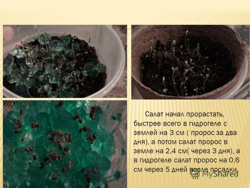 Салат начал прорастать, быстрее всего в гидрогеле с землей на 3 см ( пророс за два дня), а потом салат пророс в земле на 2,4 см( через 3 дня), а в гидрогеле салат пророс на 0,6 см через 5 дней после посадки.