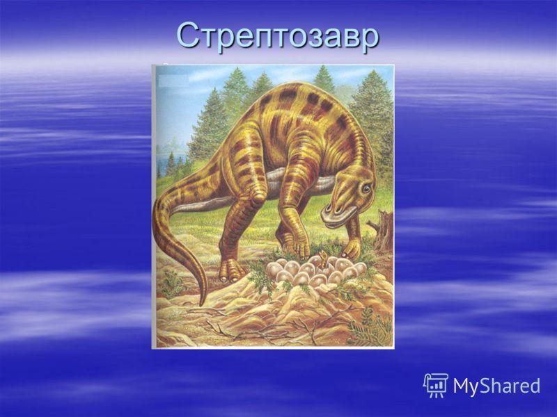 Стрептозавр Стрептозавр