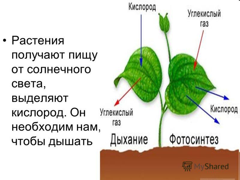 Растения получают пищу от солнечного света, выделяют кислород. Он необходим нам, чтобы дышать