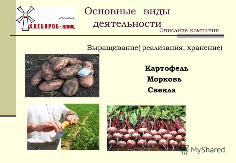 Основные виды деятельности Выращивание( реализация, хранение) Картофель Морковь Свекла Описание компании