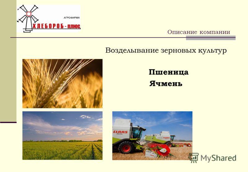 Возделывание зерновых культур Пшеница Ячмень Описание компании