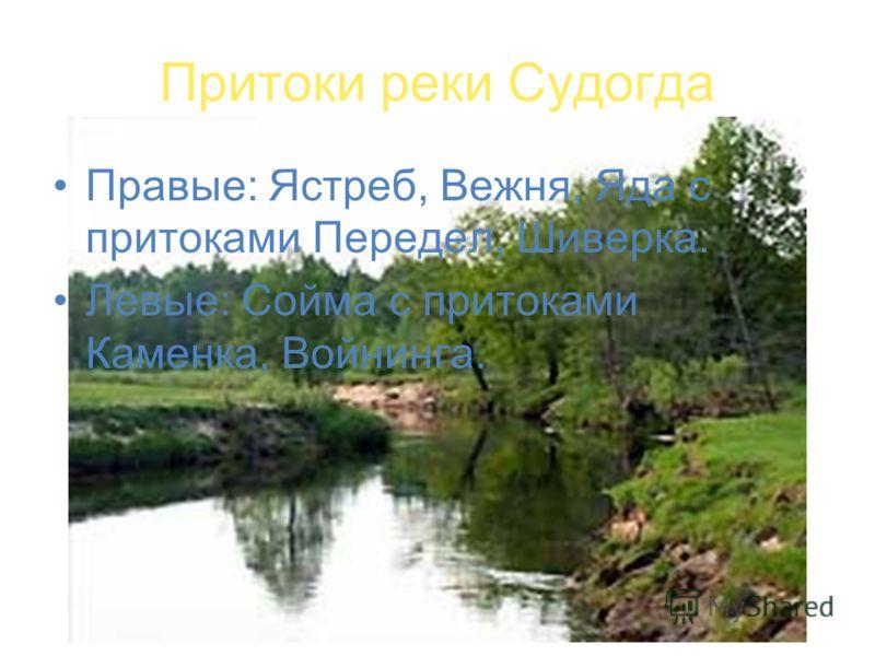 Притоки реки Судогда Правые: Ястреб, Вежня, Яда с притоками Передел, Шиверка. Левые: Сойма с притоками Каменка, Войнинга.