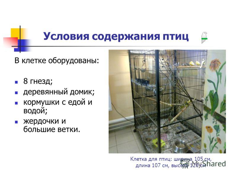 Условия содержания птиц В клетке оборудованы: 8 гнезд; деревянный домик; кормушки с едой и водой; жердочки и большие ветки. Клетка для птиц: ширина 105 см, длина 107 см, высота 120 см