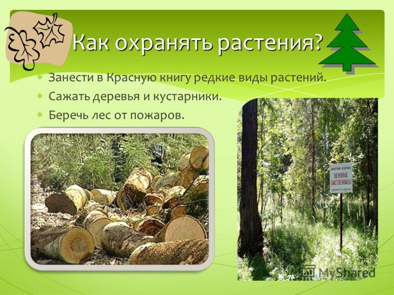 Занести в Красную книгу редкие виды растений. Сажать деревья и кустарники. Беречь лес от пожаров. Как охранять растения?