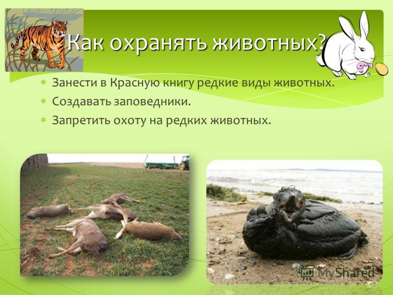 Занести в Красную книгу редкие виды животных. Создавать заповедники. Запретить охоту на редких животных. Как охранять животных?