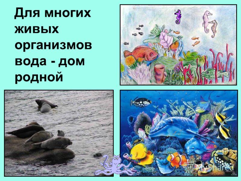 Для многих живых организмов вода - дом родной