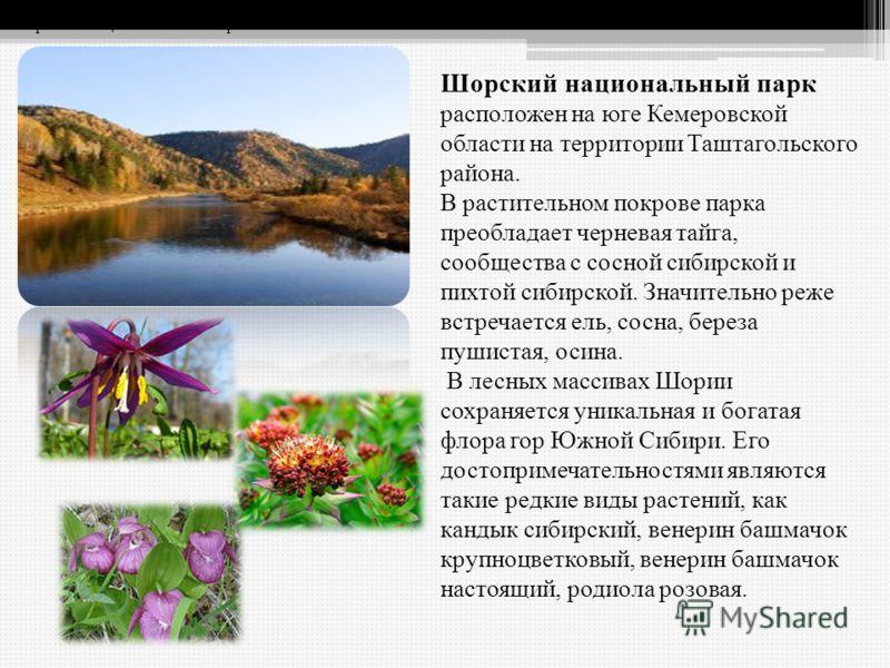Шорский национальный парк расположен на юге Кемеровской области на территории Таштагольского района. В растительном покрове парка преобладает черневая тайга, сообщества с сосной сибирской и пихтой сибирской. Значительно реже встречается ель, сосна, б