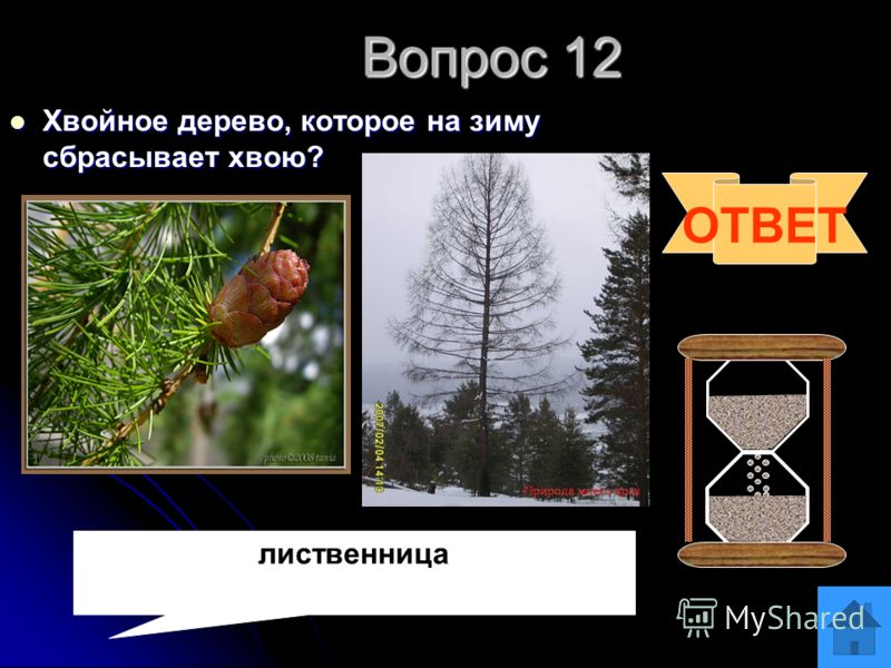 Вопрос 11 Хищное насекомое, которое поедает свою добычу на лету. Хищное насекомое, которое поедает свою добычу на лету. ОТВЕТ стрекоза