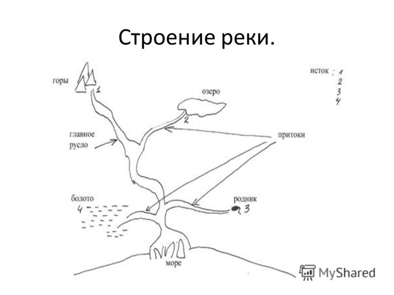 Строение реки.