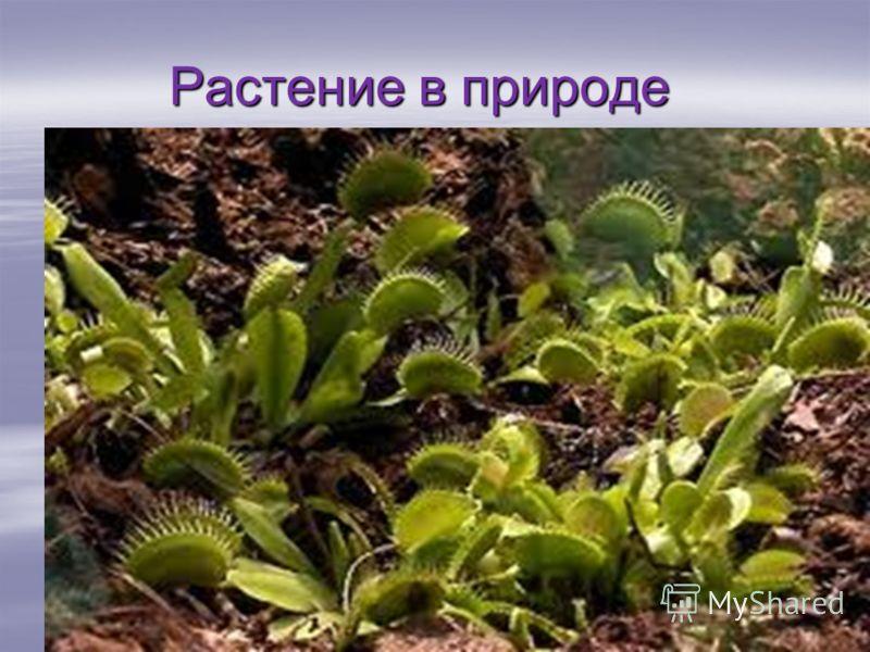 Растение в природе