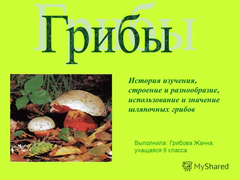 Выполнила: Грибова Жанна, учащаяся 9 класса История изучения, строение и разнообразие, использование и значение шляпочных грибов