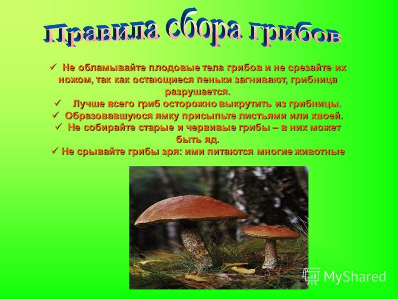 Не обламывайте плодовые тела грибов и не срезайте их ножом, так как остающиеся пеньки загнивают, грибница разрушается. Не обламывайте плодовые тела грибов и не срезайте их ножом, так как остающиеся пеньки загнивают, грибница разрушается. Лучше всего