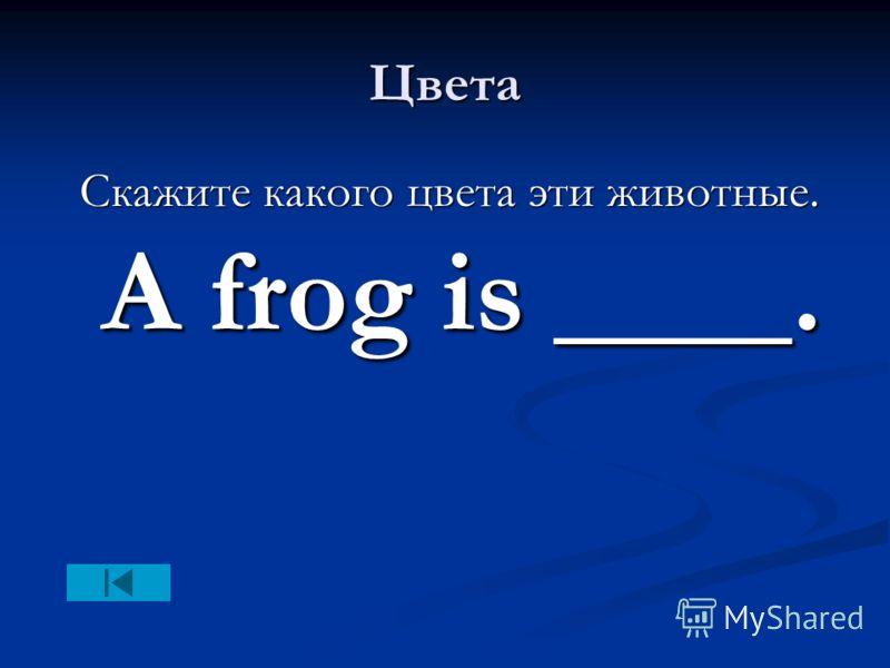 Цвета Скажите какого цвета эти животные. A frog is ____. Скажите какого цвета эти животные. A frog is ____.