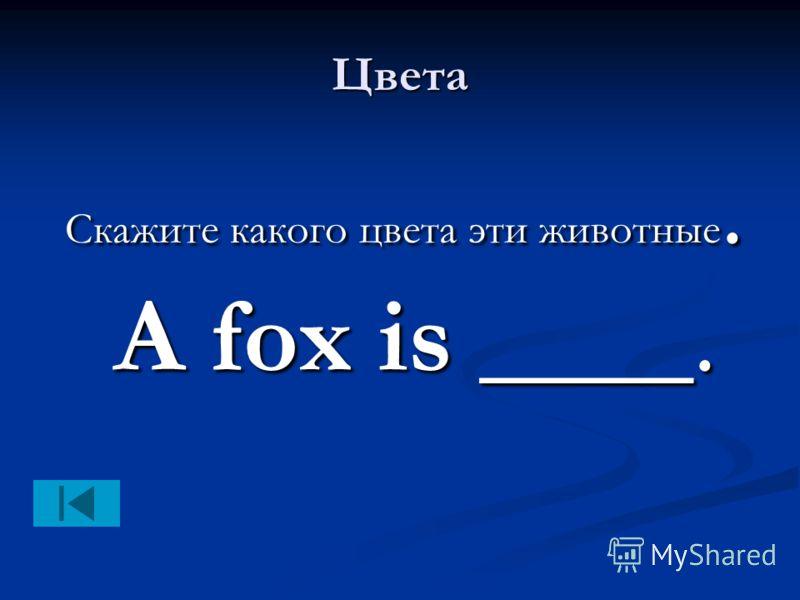 Цвета Скажите какого цвета эти животные. A fox is ____. Скажите какого цвета эти животные. A fox is ____.