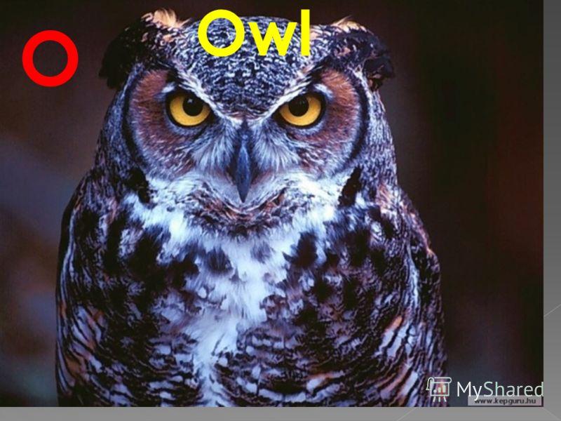 Owl O
