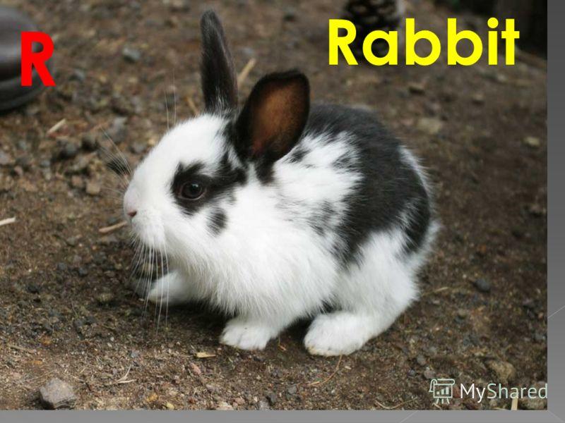 Rabbit R