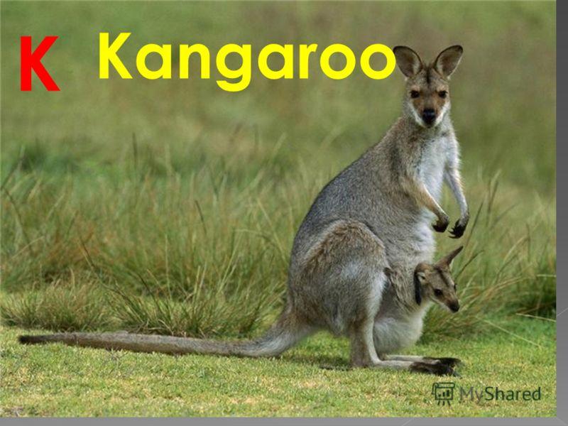 Kangaroo K