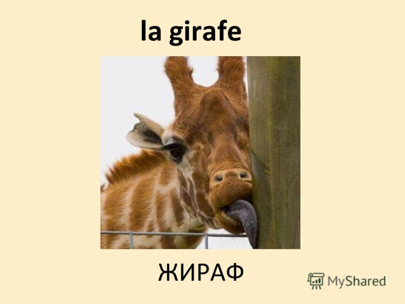 la girafe ЖИРАФ