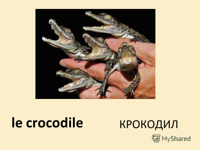le crocodile КРОКОДИЛ
