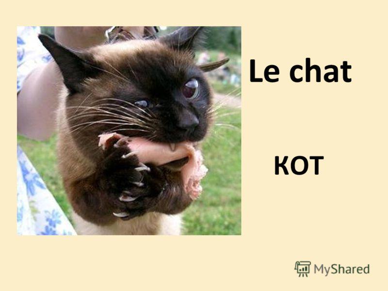 Le chat КОТ
